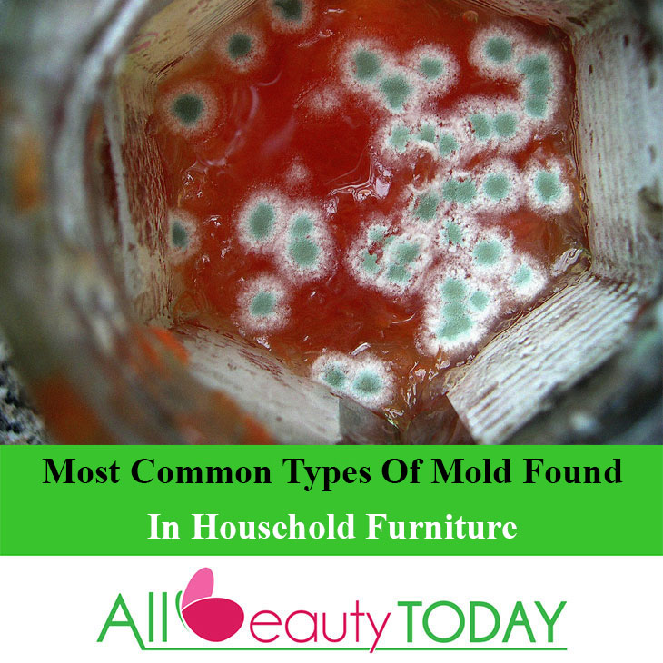 Common Types Of Mold