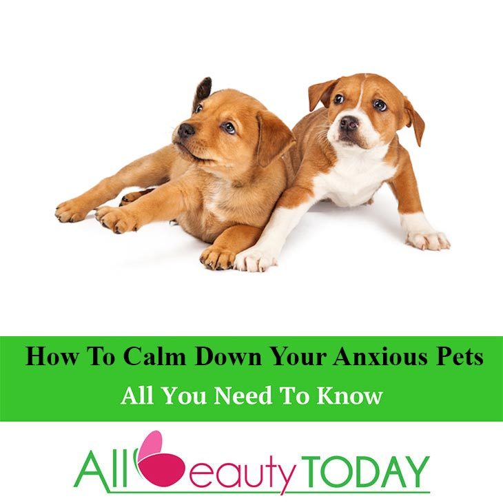 How To Calm Down Your Anxious Pets