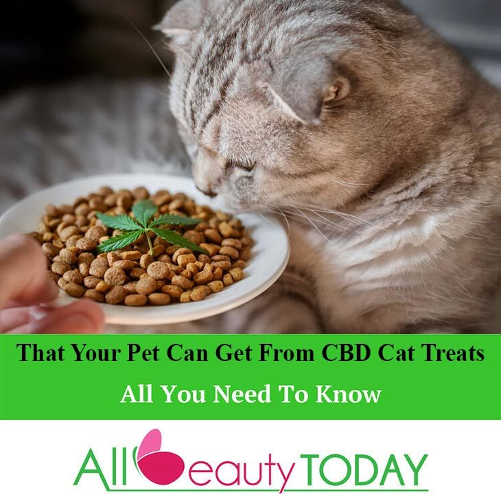 That Your Pet Can Get From CBD Cat Treats